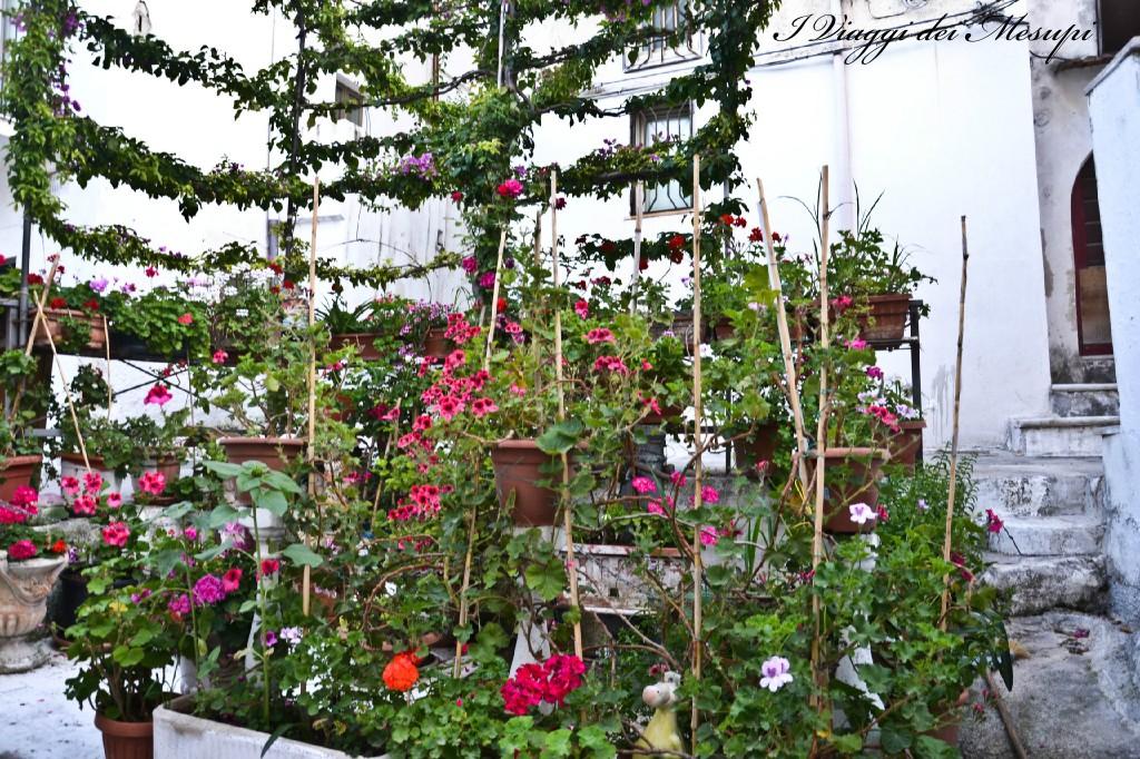 Rodi Garganico e i fiori