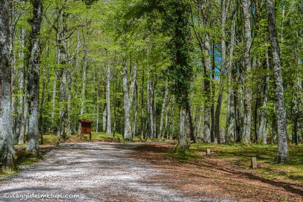 Astinenza da viaggio e Voglia di viaggiare - Foresta umbra